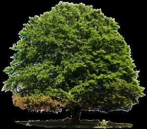 deciduous-tree-1007738_1280